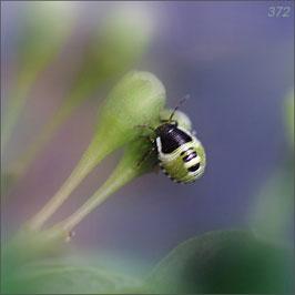 Käferchen in Grün