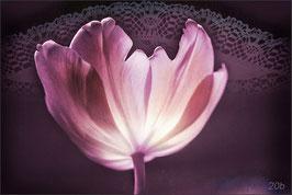 Tulpe mit Spitze