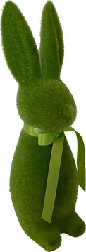 Hase grün