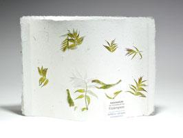 Auriolenlicht Fiederspiere