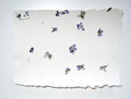 A4, Büttenpapier Veilchen Einzelblatt