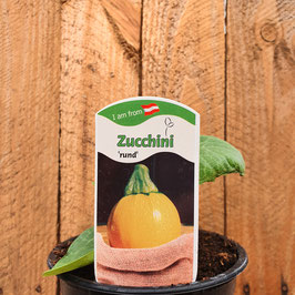 Zucchini rund gelb