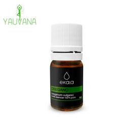Aceite Esencial de Oregano Orgánico (Origanum vulgare) 100% Puro - Frasco x 5 ml