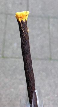 Zeytoon Schwarzer Siwak - Miswak  Zahnpflege - Zahnputzholz