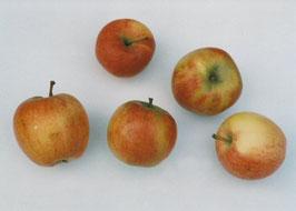 AF01: Mengenbilder Früchte