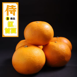 【B級品】たかみ農園の侍紅甘夏 10kg