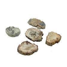 Tranche de Bois fossilisé