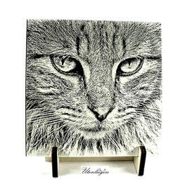 Fotogravur Katzengesicht, getigerte Katze