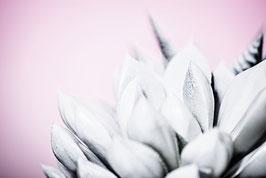 White Cactus 1