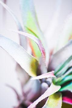 Colorful Cactus 1