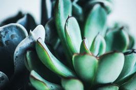 Green Cactus 2