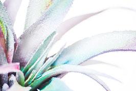Colorful Cactus 2