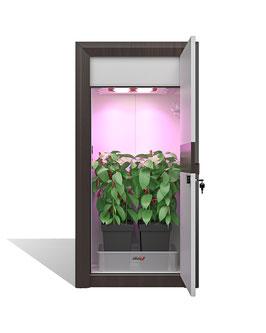 urban Chili grow cabinet set - assembled - classic growbox set
