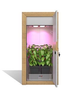 urban Chili grow cabinet set - assembled - nature line growbox set