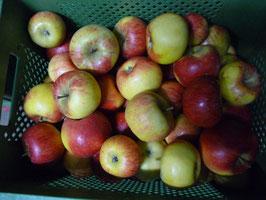 Äpfel würzig (Topaz o.ä.)
