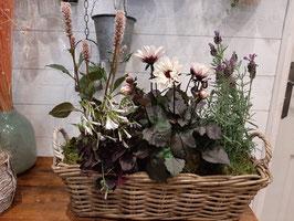 Arrangement de plantes, à partir de 50€