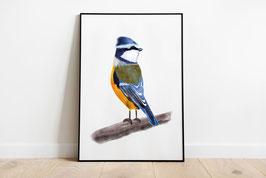 Poster - Blaumeise - Vogel