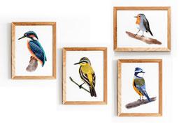 Posterset- 4 Vögel - Vogelillustration