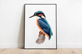 Poster - Eisvogel - Eistaucher