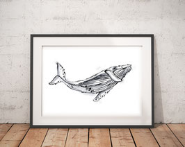 Poster - Wal - Maritim - Wal Zeichnung