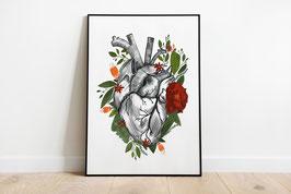 Poster - Anatomische Herz - Florales Herz