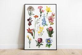 Poster - Botanik - Blumen - Wildblumen