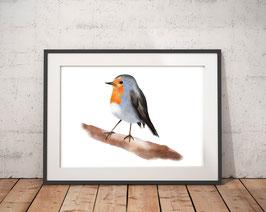 Poster - Rotkehlchen - Vogel