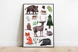 Poster - Waldtiere - Fuchs, Hirsch, Wildschwein, Eule, Maus