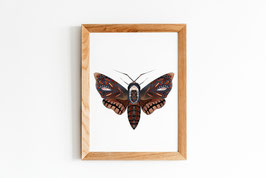 Poster - Motte - Insekt - Natur