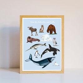Poster - Illustration Tiere der Arktis und Antarktis