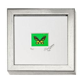 """AD-0033 - Kunstdruck """"Schmetterling"""" im Naturholzrahmen """"Silber"""" 15 x 15 cm"""