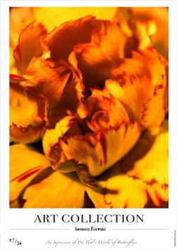AMOROUS FLOWERS - AC 27/54 - F -
