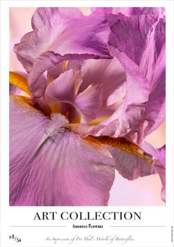 AMOROUS FLOWERS - AC 28/54 - B -