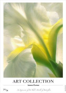 AMOROUS FLOWERS - AC 32/54 - B -