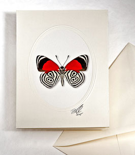 "Kunstkartenset ""Schmetterling"" AT-0028 - Diaethria eluina -"