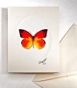 Kunstkartenset AT-0016 - Hebomoia leucippe -