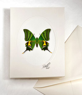 "Kunstkartenset ""Schmetterling"" AT-0021 - Teinopalpus imperialis -"