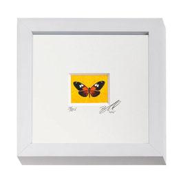 """AD-0032 - Kunstdruck """"Schmetterling"""" im Naturholzrahmen """"weiss"""" 15 x 15 cm"""