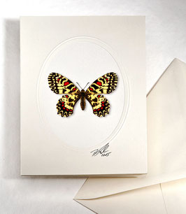 "Kunstkartenset ""Schmetterling"" AT-0026 - Zerynthia rumina -"