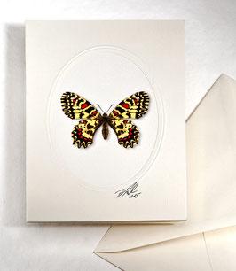"Kunstkartenset ""Schmetterling"" AT-0026 - Zerynthia rumina -"