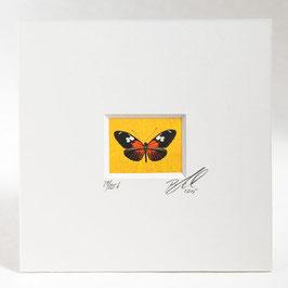 """AD-0032 - Kunstdruck """"Schmetterling"""" im Passepartout 15 x 15 cm, ohne Bilderrahmen"""