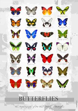 """Künstlerisches/Pädagogisches Plakat """"Butterflies"""" - P013/02"""