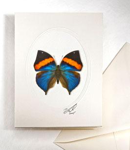 """Kunstkartenset """"Schmetterling"""" AT-0019 - Kallima paralecta -"""