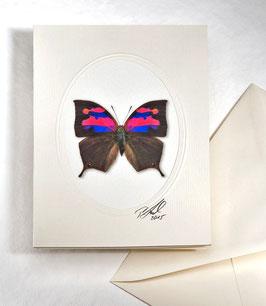 """Kunstkartenset """"Schmetterling"""" AT-0024"""