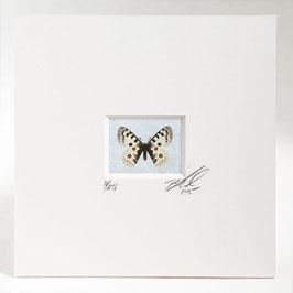 """AD-0031 - Kunstdruck """"Schmetterling"""" im Passepartout 15 x 15 cm, ohne Bilderrahmen"""