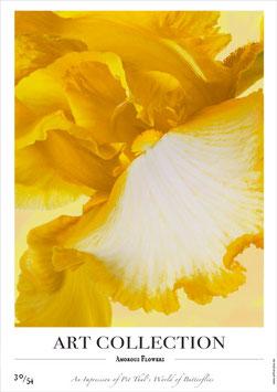 AMOROUS FLOWERS - AC 30/54 - F -