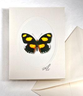 """Kunstkartenset """"Schmetterling"""" AT-0025 - Cantonephele numilia -"""