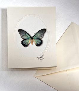 "Kunstkartenset ""Schmetterling"" AT-0010 - Papilio anactus -"