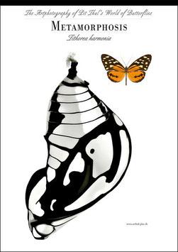 """Künstlerisches Plakat """"Metamorphosis"""" - P006/04 -"""