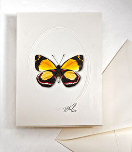 "Kunstkartenset ""Schmetterling"" AT-0014 - Delias leucias -"